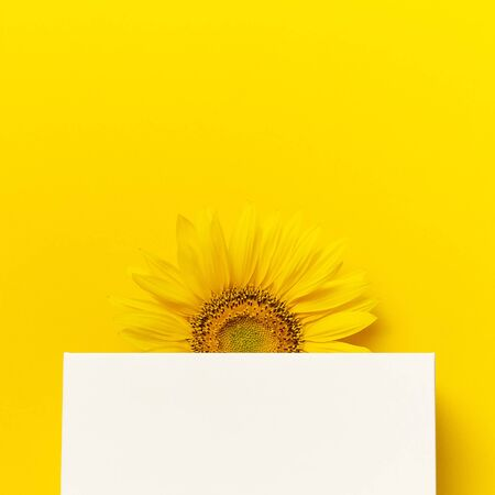 Beautiful fresh sunflower and white gift paper bag on yellow background. Flat lay, top view, copy space. Autumn or summer Concept, harvest time, agriculture. Sunflower natural background. Flower card.