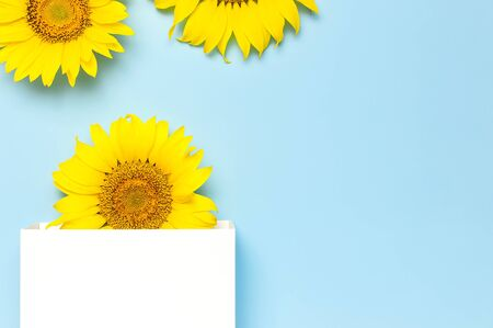Beautiful fresh sunflower and white gift paper bag on blue background. Flat lay, top view, copy space. Autumn or summer Concept, harvest time, agriculture. Sunflower natural background. Flower card.