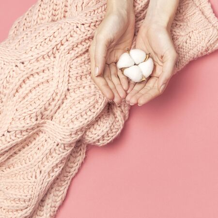 Creative composition with cotton. Hands of young woman holding white cotton flowers on pink background. Top view flat lay copy space. Cotton flowers. Lifestyle gentle background.