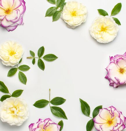 Flowers composition. White and pink fresh roses and green leaves on light background. Flat lay, top view, copy space. Flower card, greeting, holiday mockup. Valentine's Day background, womens day. Standard-Bild
