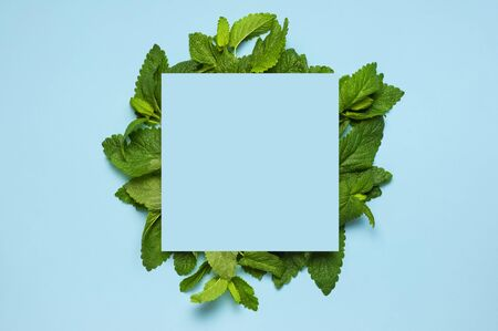 Fresh green leaves of mint, lemon balm, peppermint and blue blank paper on blue background top view. Mint leaf texture. Ecology natural layout. Flat lay Mint leaves pattern spearmint herbs nature. Stok Fotoğraf