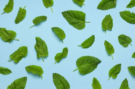 Pattern of fresh green leaves of mint, lemon balm, peppermint on blue background top view. Mint leaf texture. Ecology natural layout. Flat lay Mint leaves pattern spearmint herbs nature background. Stok Fotoğraf