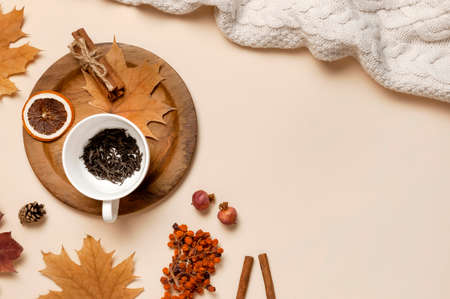 Flat lay autumn composition. White cup with tea leaves, wooden plate, knitted fashion sweater or plaid, yellow maple leaves, cinnamon, dry mountain ash, orange on beige background top view copy space.