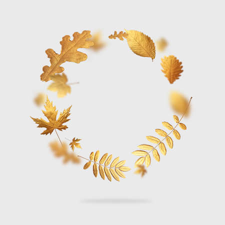 Golden flying autumn leaves in the form of circle on light gray background. Autumn concept, fall background. Minimal floral design, autumn leaf frame. Golden twig. Autumn creative composition