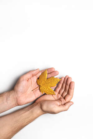 Male hands hold golden autumn leaves on white background top view copy space. Autumn minimalistic concept, Fall. Autumn background. Minimal floral design, Autumn composition. Golden twig 免版税图像