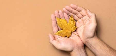 Male hands hold golden autumn leaves on brown beige background top view copy space. Autumn minimalistic concept, Fall. Autumn background. Minimal floral design, Autumn composition. Golden twig