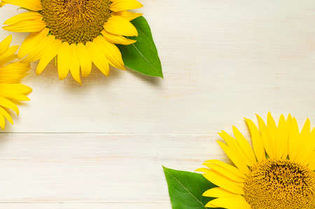 Frame made of Yellow sunflowers on white wooden background top view copy space. Beautiful fresh sunflowers, yellow flowers bouquet. Harvest time, farming Agriculture autumn or summer floral background 免版税图像