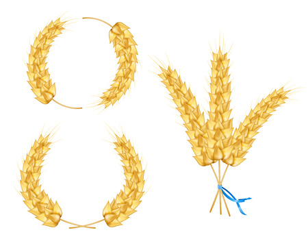 Ear pf wheat, barley, oat, isolated on white background. Wheat sprigs tied with blue ribbon. Wreath of wheat. Vector illustration of spikelet.
