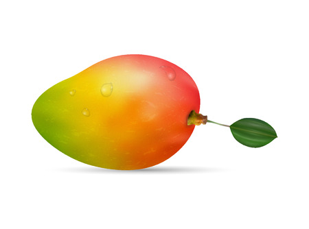 Tropical and exotic fruit with green leaf. Isolated ripe mango on the white background with drops of water. Ilustrace