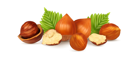 Hazelnuts with leaves. Photo-realistic vector illustration. Fresh organic filbert isolated on white background. Closeup set. Иллюстрация