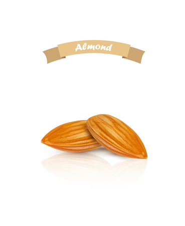 Almond isolated. Nuts on white background. Vector illustration.