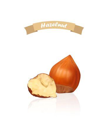 Hazelnuts. Photo-realistic vector illustration. Fresh organic filbert isolated on white background. Closeup.