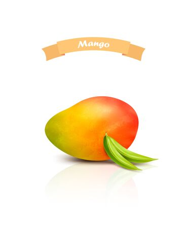 Mango with leaves isolated on white background. Realistic vector illustration.