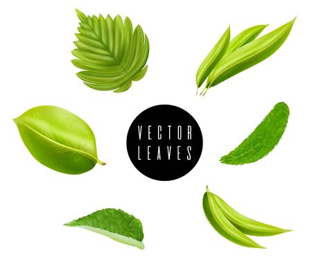 Leaves vector set isolated on white background. Various shapes of green leaves of trees and plants. Elements for eco and bio logos.