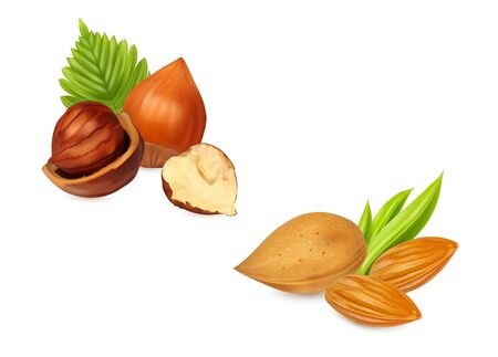 Hazelnuts almonds with leaves. Nuts set isolated on white background. Photo-realistic vector illustration.