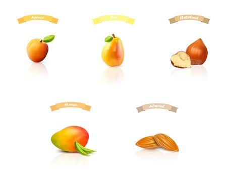 Stellen Sie isolierte Früchte und Nüsse ein: Aprikose, Birne, Haselnuss, Mango, Mandeln, Pfirsich. Realistische Vektorillustration. Vektorgrafik