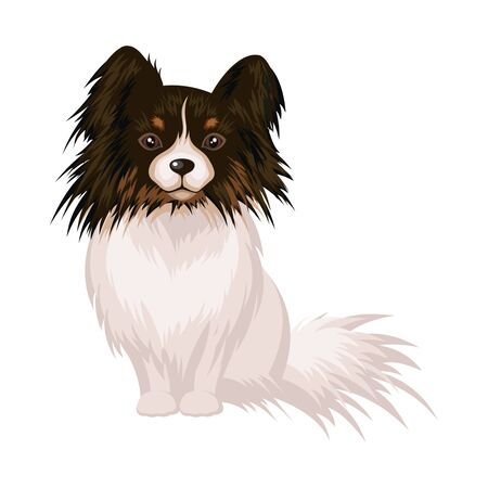 dog ears: The little decorative dog Papillon