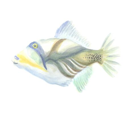 trigger fish: Exotic decorative fish on a white background. Watercolor painting Stock Photo