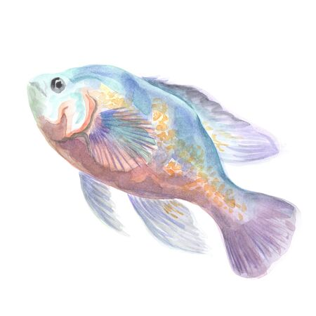 astronotus: Exotic decorative fish on a white background. Watercolor painting Stock Photo
