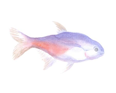 neon tetra: Exotic decorative fish on a white background. Watercolor painting Stock Photo