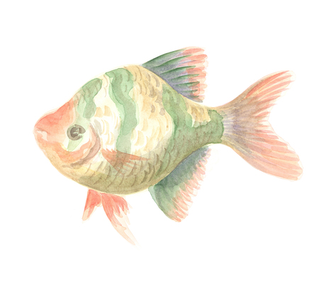 tetrazona: Exotic decorative fish on a white background. Watercolor painting Stock Photo