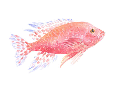decorative fish: Exotic decorative fish on a white background. Watercolor painting Stock Photo