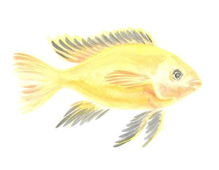 cichlid: Exotic decorative fish on a white background. Watercolor painting Stock Photo