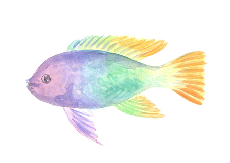 zebra cichlid: Exotic decorative fish on a white background. Watercolor painting Stock Photo