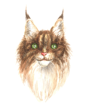 maine cat: Image of a thoroughbred Maine Coon cat. Watercolor painting.