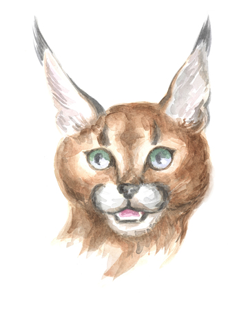 thoroughbred: Image of a thoroughbred Caracal cat. Watercolor painting. Stock Photo