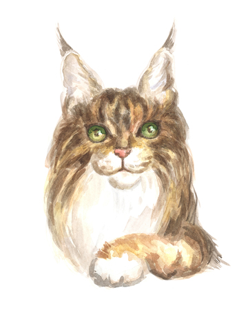 thoroughbred: Image of a thoroughbred Maine Coon cat. Watercolor painting.