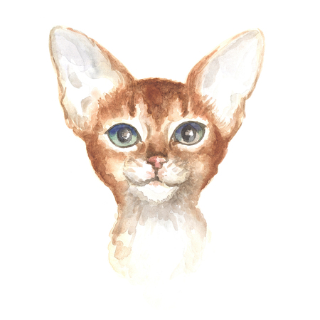 thoroughbred: head of the Abyssinian kitty. Image of a thoroughbred cat. Watercolor painting