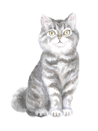 scottish straight: Scottish Straight cat. Image of a thoroughbred cat. Watercolor painting Stock Photo