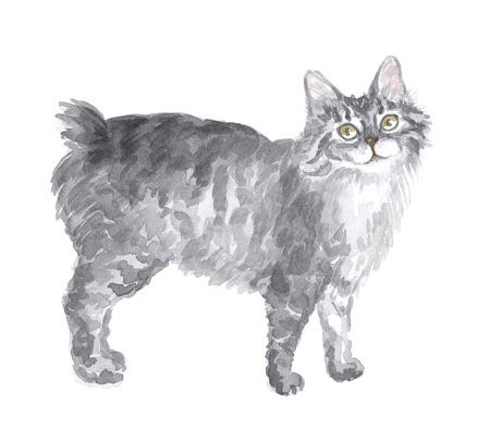 kuril: The Kuril bobtail. Image of a thoroughbred cat. Watercolor painting