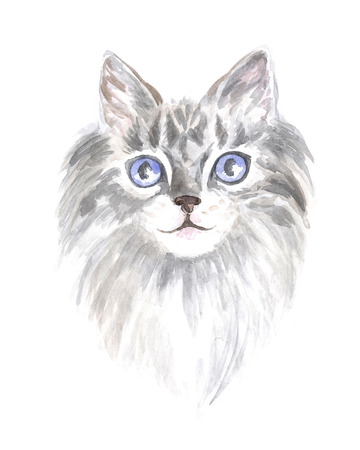 thoroughbred: Image of a thoroughbred cat. Watercolor painting.