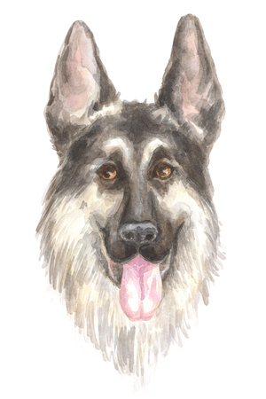 thoroughbred: German shepherd. Image of a big thoroughbred dog. Watercolor painting.