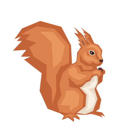 the squirrel gnaws nut. wild forest animal Illustration