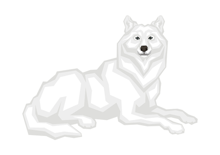 The big Arctic wolf. Vector image of a predatory animal. Isolated on a white background. Illustration