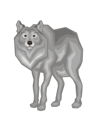 The big grey wolf. Vector image of a predatory animal. Isolated on a white background. Illustration