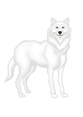 omnivorous: The big Arctic wolf. Vector image of a predatory animal. Isolated on a white background. Illustration