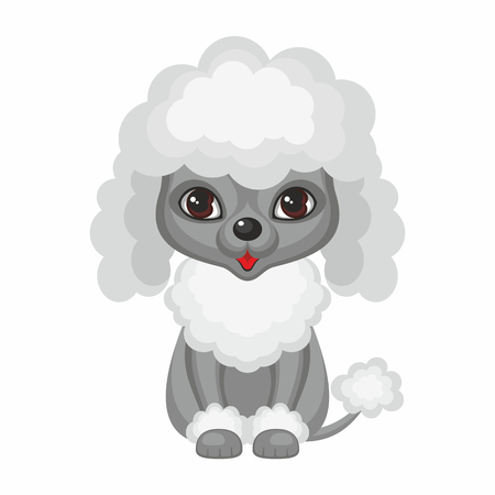 Poodle. Vector image of a cute purebred dogs in cartoon style.
