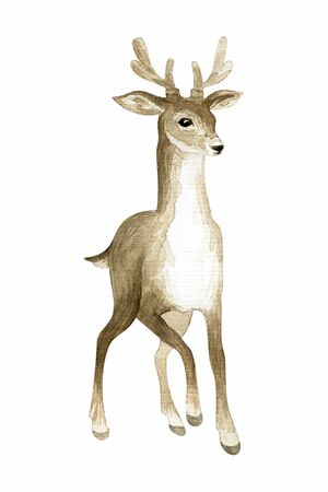 Beautiful deer. Hand painted watercolor illustration isolated on a white background. Standard-Bild - 140436714