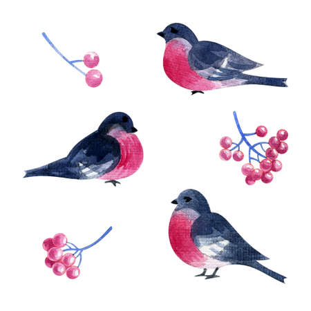 Bullfinch birds and red berries set.Hand painted watercolor illustration isolated on a white background.