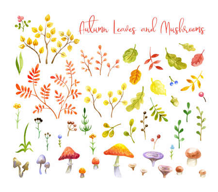 Autumn leaves, berries and mushrooms set. Hand painted watercolor illustrations isolated on a white background.