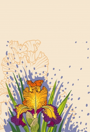 decorative designs of iris flowers