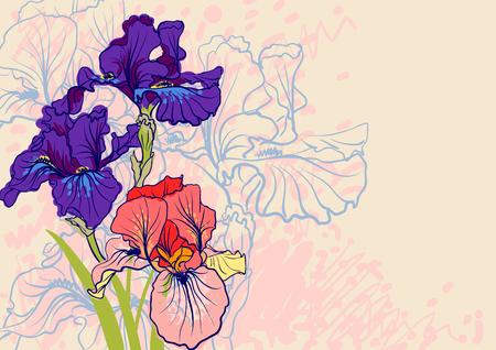 decorative designs of iris flowers