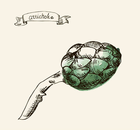 artichoke: Hand drawn illustration of artichoke Stock Photo