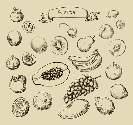 Set of Doodle Fruits hand drawn photo