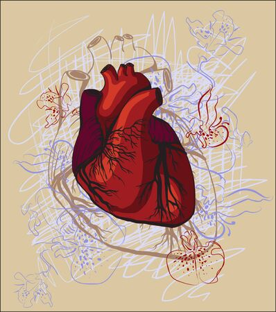 drawing of the heart, anatomical photo