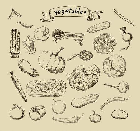 illustration of a set of hand-painted vegetables illustration